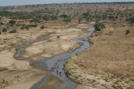 Der Tarangire-Nationalpark in der Trockenzeit